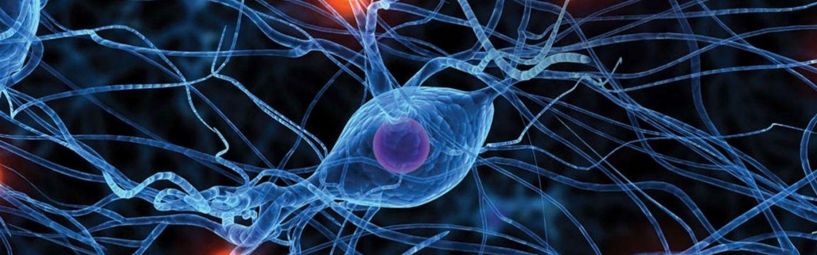 Las Neurociencias detrás de la resistencia al cambio
