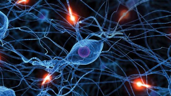 las neurociencias y el cambio